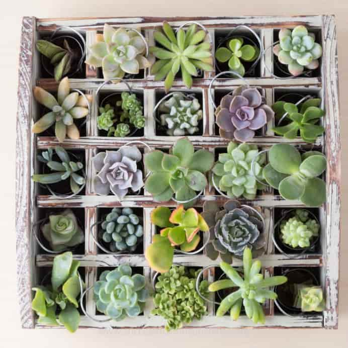 I-love-the-idea-to-use-succulents-for-an-advent-calendar. Please share. Look forward to Mondays with our craft inspiration newsletter. Crafty goodness delivered to your inbox - CraftyLikeGranny.com #succulents #gardening #diy