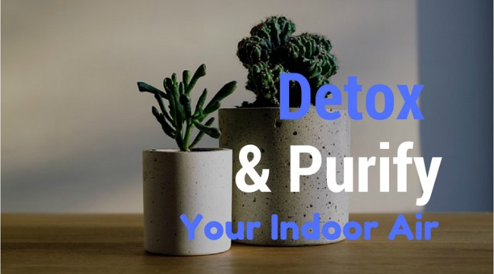 5 Plants That Detox and Purify your Indoor Air. Bring nature indoors with some wonderful detoxing and purifying indoor plants suggested by Nourish The Planet. Please share. Look forward to Mondays with our craft inspiration newsletter. Crafty goodness delivered to your inbox - CraftyLikeGranny.com #purifyingplants