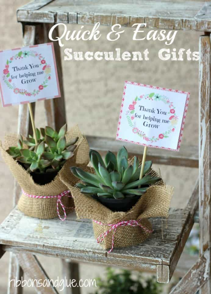 Quick and Easy Succulent Gift. Looking to create a simple and effective gift for Mom? This lovely succulents idea by Ribbons and Glue is just perfect. Check out the tutorial. Please share. Look forward to Mondays with our craft inspiration newsletter. Crafty goodness delivered to your inbox - CraftyLikeGranny.com #succulents #mothersdaygift