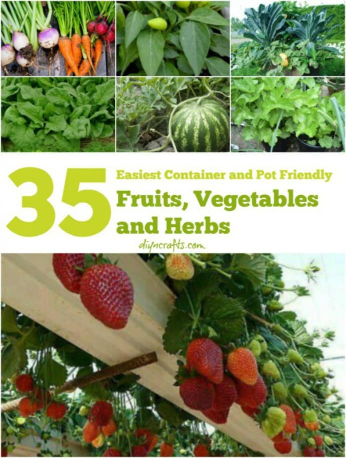 A comprehensive list of easy to grow fruits, herbs and veggies in containers. Planting up containers is simple to do and you will reap the rewards of your gardening labour. DIYnCrafts have some excellent tips and tricks in their huge list. Please share. You will always look forward to Mondays, with our craft inspiration roundups -CraftyLikeGranny.com #gardening #gardeningtips #garden
