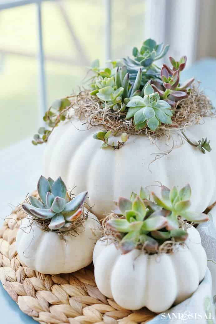 Fall is a lovely time to get creative with pumpkins. Kim from Sand & Sisal has a wonderful tutorial for using succulents within a pumpkin. Please share. Look forward to Mondays with our craft inspiration newsletter. Crafty goodness delivered to your inbox - CraftyLikeGranny.com #fallcraft #succulents #pumpkincraft