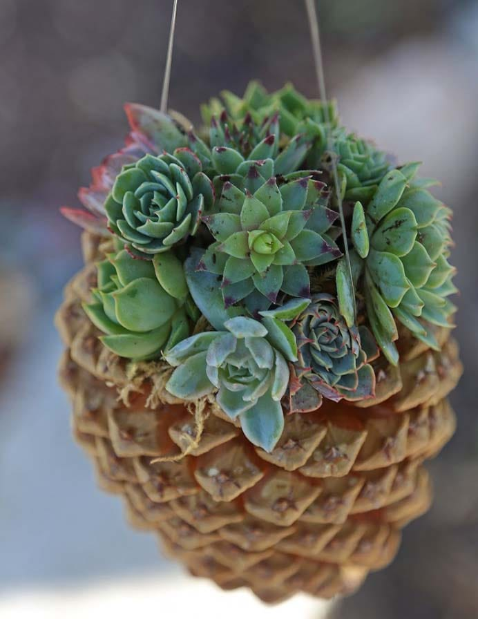 Pine Cone Succulent Planter. This is great way to incorporate different elements of nature into one stunning planter. Follow the tutorial on The Inspired Home Garden. Please share and make Mondays fun, get our craft inspiration delivered to your inbox - CraftyLikeGranny.com #pineconecraft #planter #diy