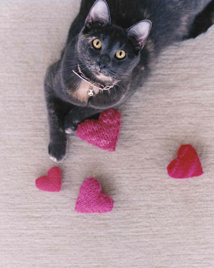 Knitted Catnip Heart Shaped Toys. Your pets don't have to miss out on Valentine's Day! A great way to use up leftover yarn. Create these knitted toys by following the tutorial on Martha Stewart. Please share. The best in craft delivered to your inbox every Monday - CraftyLikeGranny.com #valentinesdaycrafts #crafts #knitting
