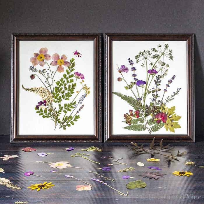Framed Pressed Flower Art by Hearth and Vine