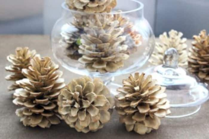 How to Bleach Pine Cones y eHow