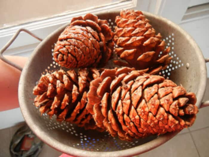 Scented Pine Cones for Christmas by Dotal Anecdotes