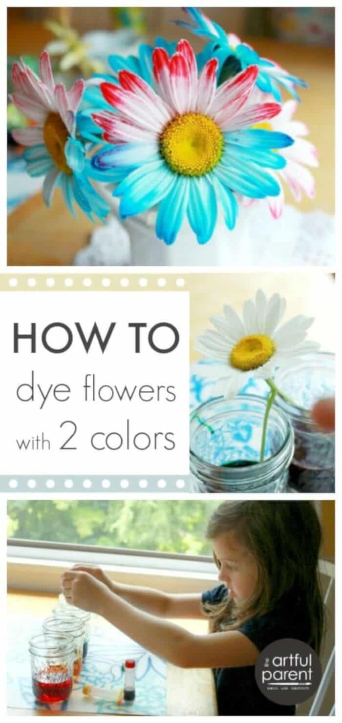 How to Dye Flowers with Two Colors by The Artful Parent