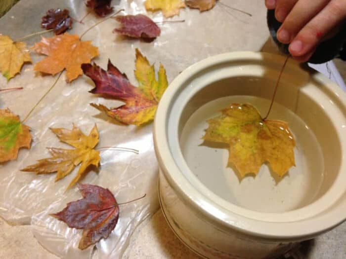 How to Make Waxed Fall Leaves by Creative Homemaking