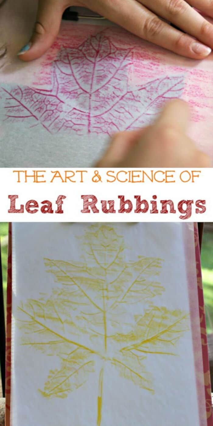 Leaf Rubbing Art & Science Activity by Edventures with Kids