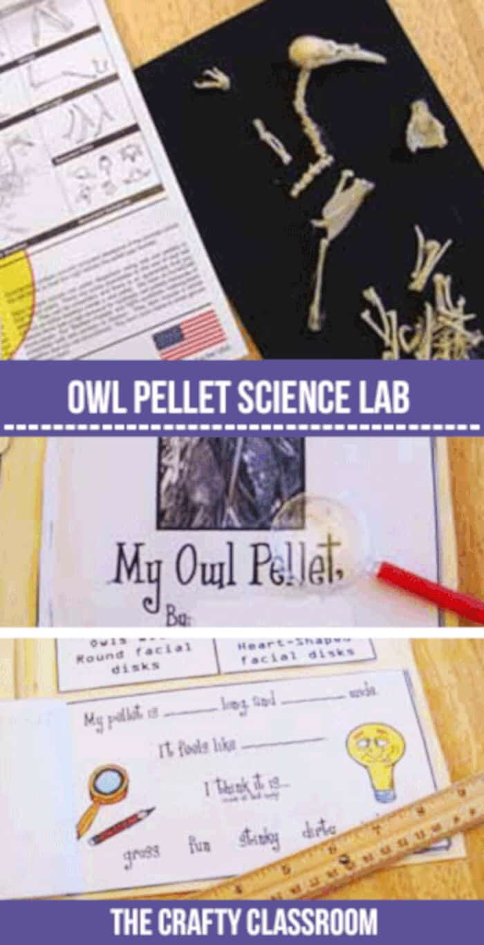 Owl-Pellet-Lab-Printables-by-The-Crafty-Classroom