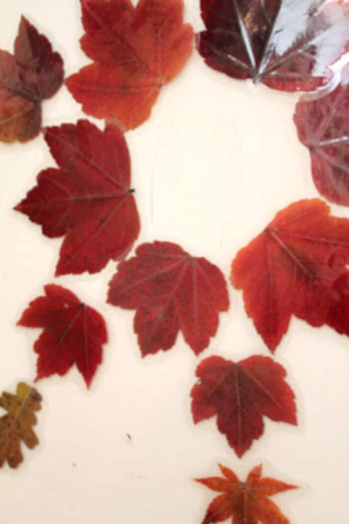 Laminated-Autumn-Leaf-Magnets-by-Filth-Wizardry