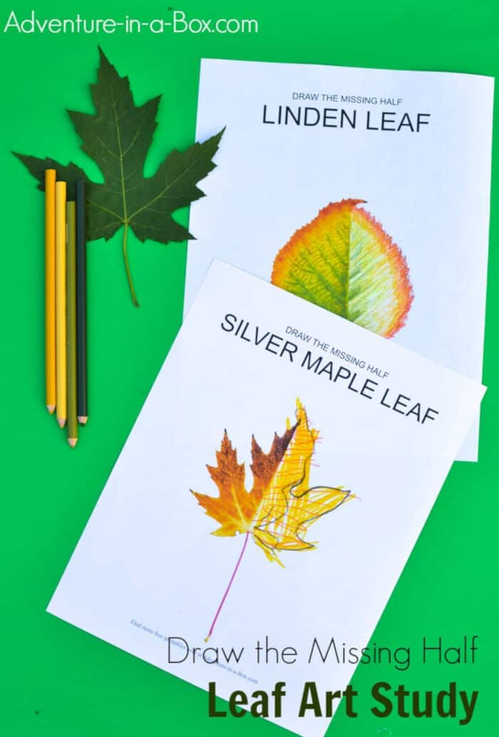 Leaf-Art-Study-by-Adventure-in-a-Box