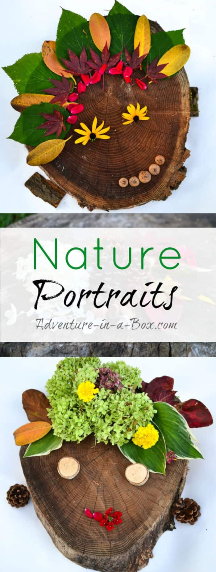 Nature-Portraits-by-Adventure-in-a-Box